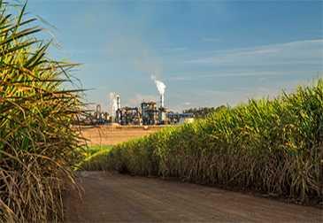 sugar-industry